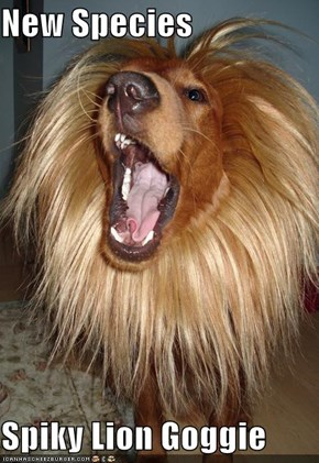 New Species  Spiky Lion Goggie