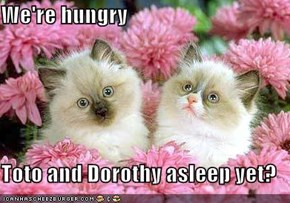 We're hungry  Toto and Dorothy asleep yet?