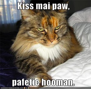 Kiss mai paw,  pafetic hooman.