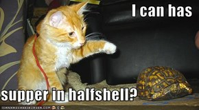 I can has   supper in halfshell?