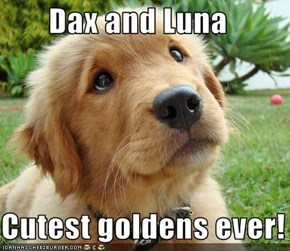 Dax and Luna  Cutest goldens ever!
