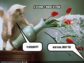 o goggie!!!