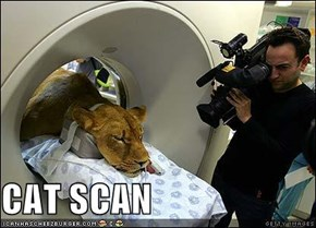 CAT SCAN