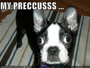 MY PRECCUSSS ...
