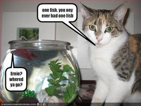 one fish. you ony ever had one fisb
