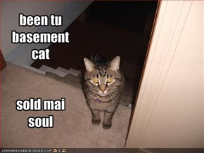 been tu basement cat