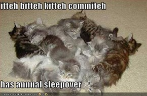 itteh bitteh kitteh commiteh  has annual sleepover