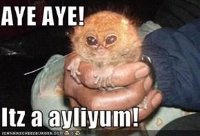 AYE AYE!  Itz a ayliyum!