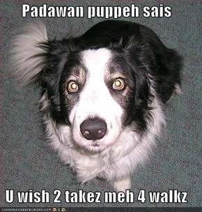 Padawan puppeh sais  U wish 2 takez meh 4 walkz