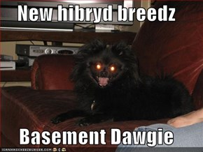 New hibryd breedz  Basement Dawgie