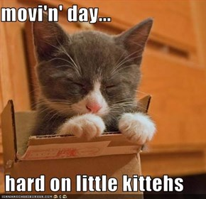 movi'n' day...   hard on little kittehs