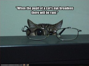 """When the pupil of a cat's eye broadens there will be rain."""