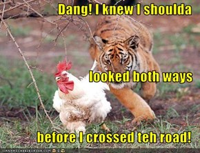 Dang! I knew I shoulda  looked both ways before I crossed teh road!