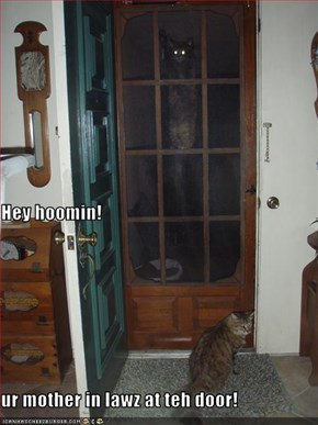 Hey hoomin! ur mother in lawz at teh door!