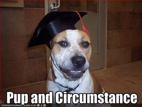 Pup and Circumstance