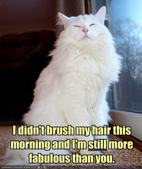 I didn't brush my hair this morning and I'm still more fabulous than you.
