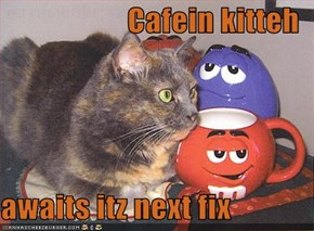Cafein kitteh  awaits itz next fix
