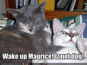 Wake up Maurice! Iz not dog!