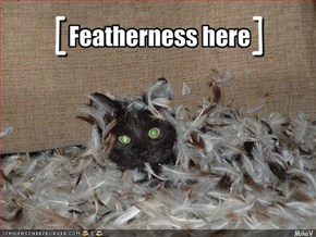 Featherness here