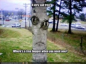 A very sad tree.