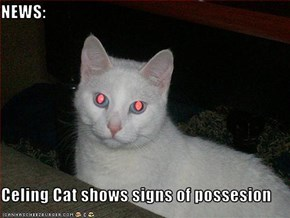 NEWS:  Celing Cat shows signs of possesion