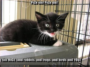 Pick me! Pick me!  I kill MICE (and rabbits, and frogs, and birds and YOU)