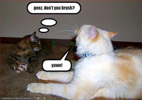 geez, don't you brush?
