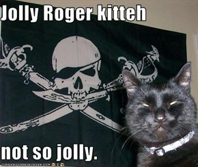 Jolly Roger kitteh  not so jolly.