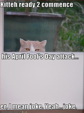 Kitteh ready 2 commence  his April Fool's Day attack... er, I mean joke. Yeah...joke.