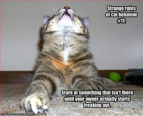 Strange rules of cat behavior #11: