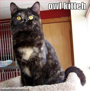 owl kitteh