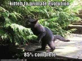 kitteh to primate evolution  85% complete