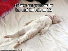 Cadaver  cat  practices  for  her  next  big  role  on  CSI