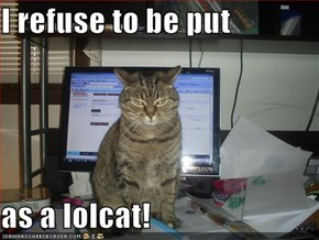 I refuse to be put  as a lolcat!
