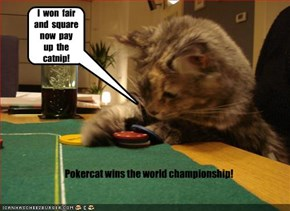 Pokercat wins the world championship!