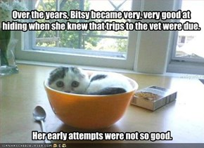 Over the years, Bitsy became very, very good at hiding when she knew that trips to the vet were due.