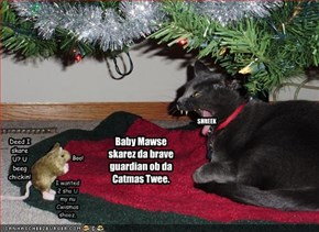 Baby Mawse skarez da brave guardian ob da Catmas Twee.