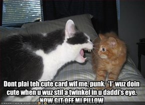 Dont plai teh cute card wif me, punk.  *I* wuz doin cute when u wuz stil a twinkel in u daddi's eye.  NOW GIT OFF MI PILLOW