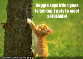 Goggie says iffin I goes to teh top, I gets to meet a FIREMAN!
