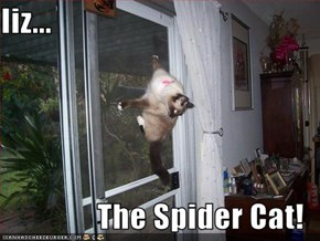 Iiz...  The Spider Cat!