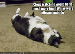 Cloud watching would be so much more fun if Winky were allowed outside.
