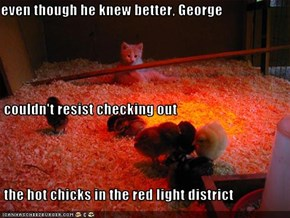 even though he knew better, George  couldn't resist checking out  the hot chicks in the red light district