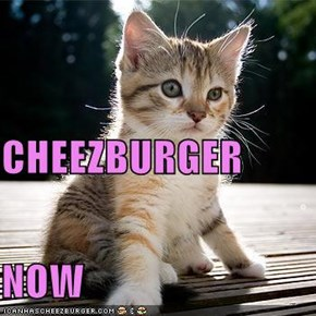 CHEEZBURGER NOW