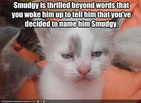 Smudgy is thrilled beyond words that  you woke him up to tell him that you've  decided to name him Smudgy.
