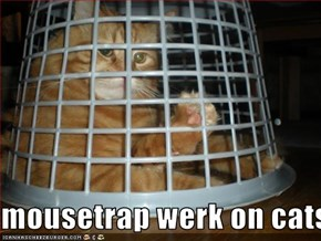 mousetrap werk on cats 2