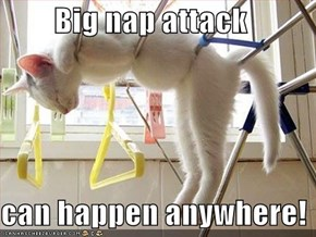 Big nap attack   can happen anywhere!