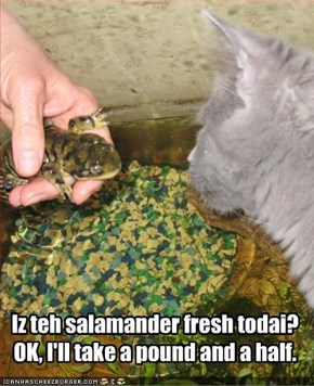 Iz teh salamander fresh todai? OK, I'll take a pound and a half.
