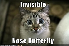 Invisible  Nose Butterfly