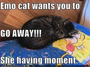 Emo cat wants you to GO AWAY!!! She having moment.