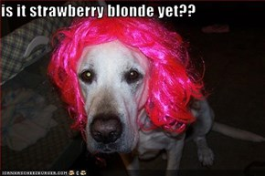 is it strawberry blonde yet??